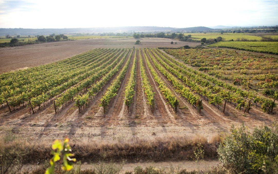 Empordà, vins i olis tocats per la tramuntana