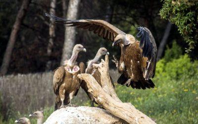 Matarranya, les ports de Beseit et les vautours