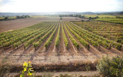 L'Empordà, vins et huiles inspirés par la Tramontane